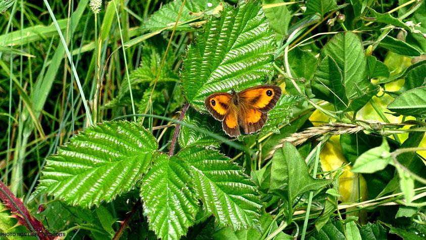 Symphonie verte pour Papillon, Etretat, photo non libre de droits