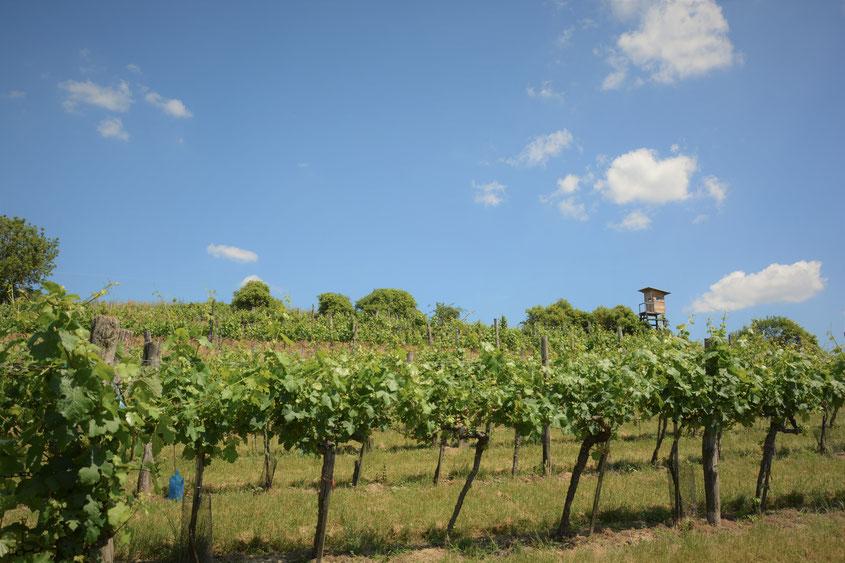 Weingarten