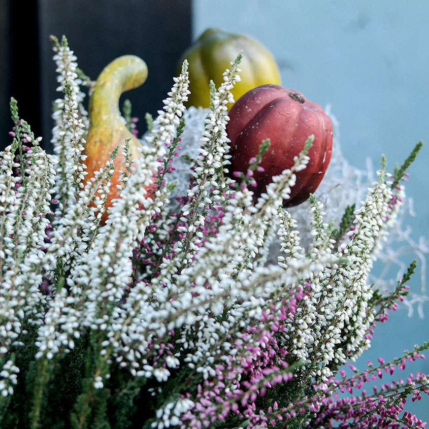 Hola Hola, der Herbst ist da und mit ihm all die wunderbaren Deko Trends, die aus Deinem Zuhause im Handumdrehen eine Wohlfühloase zaubern. Von coolen Rattan Übertöpfen über Standlaternen bis hin zu leuchtenden Blumen & coolen Gräsern | Hot Port Life & Style | www.hot-port.de | Mode & Lifestyle Blog für Trendsetter und solche, die es gern werden möchten