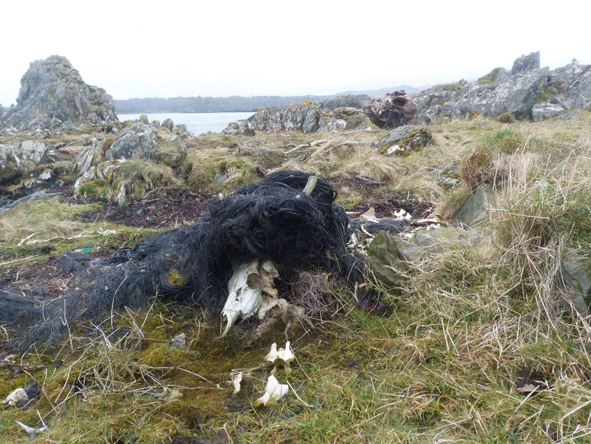 Plastic pollution - Isle of Islay, Scotland.