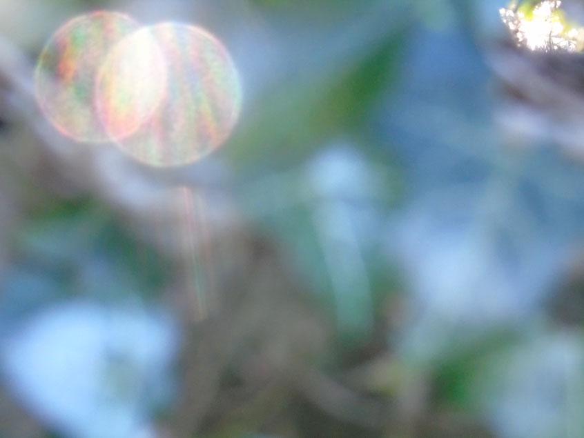 Es werde Licht....Quelle: www.lichtwesenfotografie.com