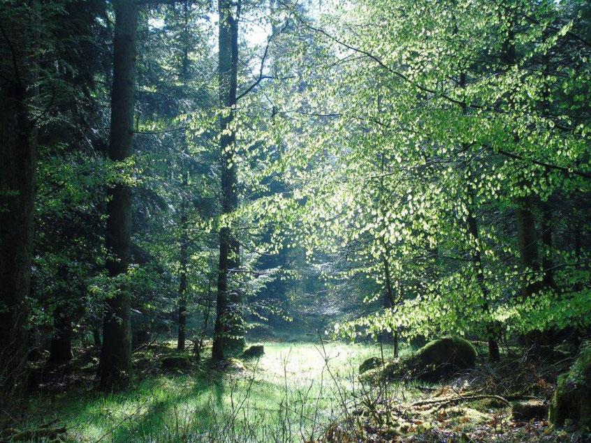 Verbindung mit der Kraft der Natur, Quelle: www.lichtwesenfotografie.com