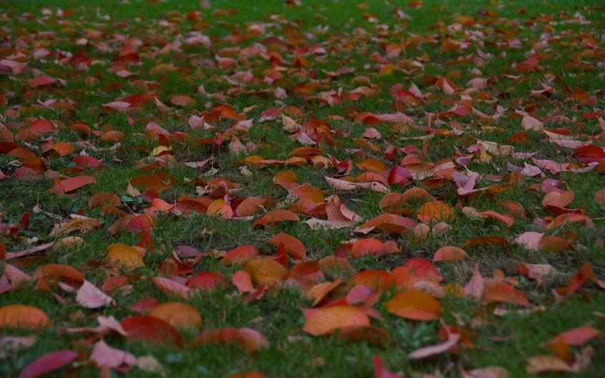 Wunderbare Herbststimmung an der Alster