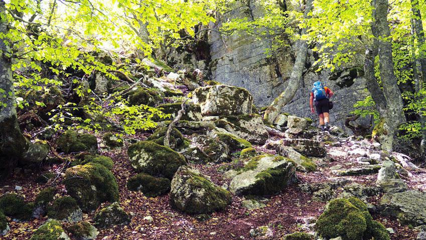 Sur la montagne de Chabre. Izon Nature : hébergements et table d'hôtes insolites et écoresponsables dans la Drôme Provençale, trek dans la Méouge