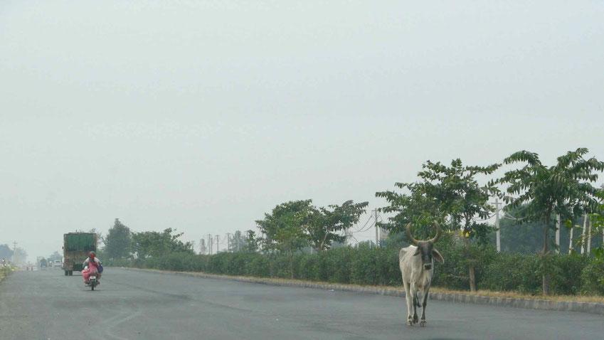 Indien Urlaub: Reise von Delhi nach Jaipur in Nordindien.