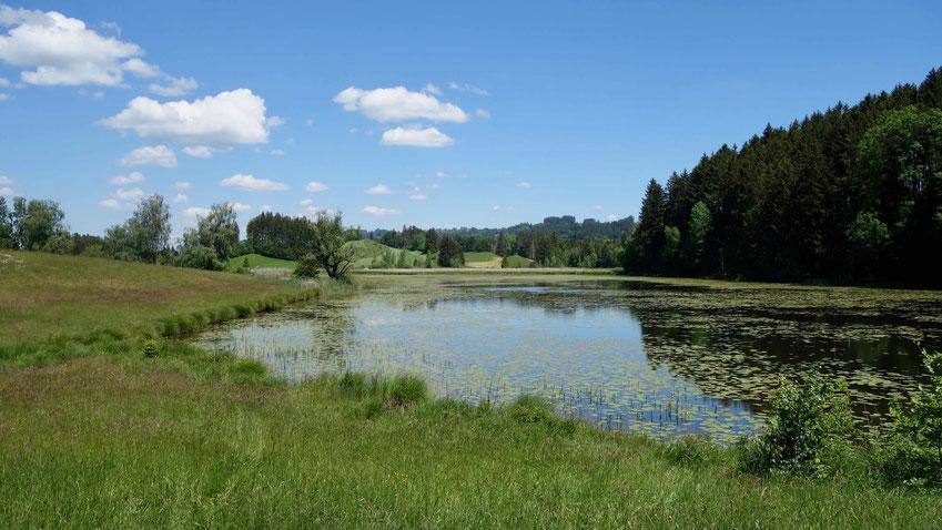 Naturschutzgebiet Widdumer Weiher im Allgäu, wandern.