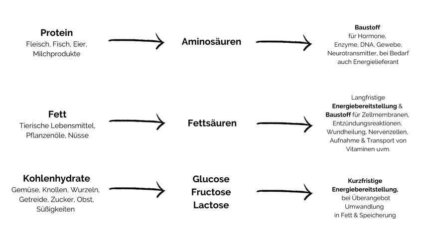 Eiweiß & Kohlenhydrate liefern 4,1 Kalorien und Fett 9,3 Kalorien pro 1 g. Aber außer als Energiequelle, werden sie ebenso für viele weitere Funktionen gebraucht.