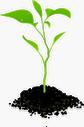 Planta - Vivir Haciendo lo que te apasiona y aportar tus talentos al mundo - HastaDondeTuQuierasLlegar - HDTQLL - Coaching