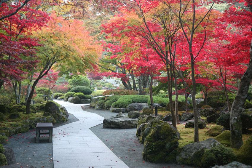 紅葉に包まれる庭園の茶室『清流庵』ではお抹茶をいただけます。
