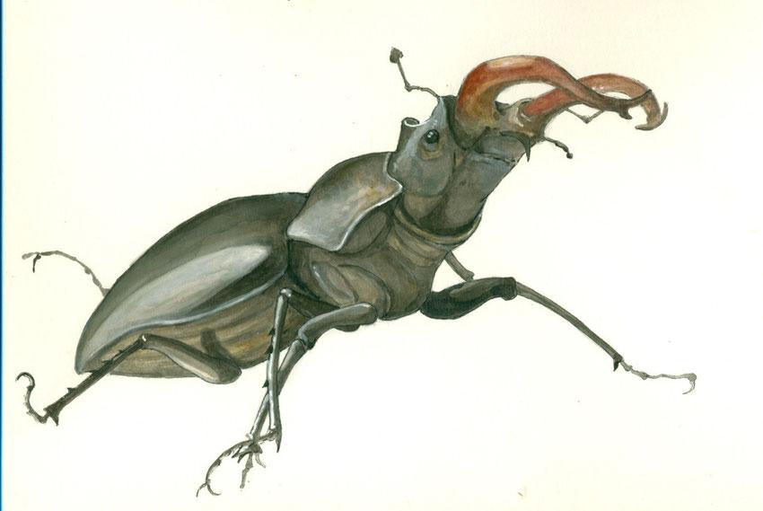 Lucanus cervus. Aquarelle