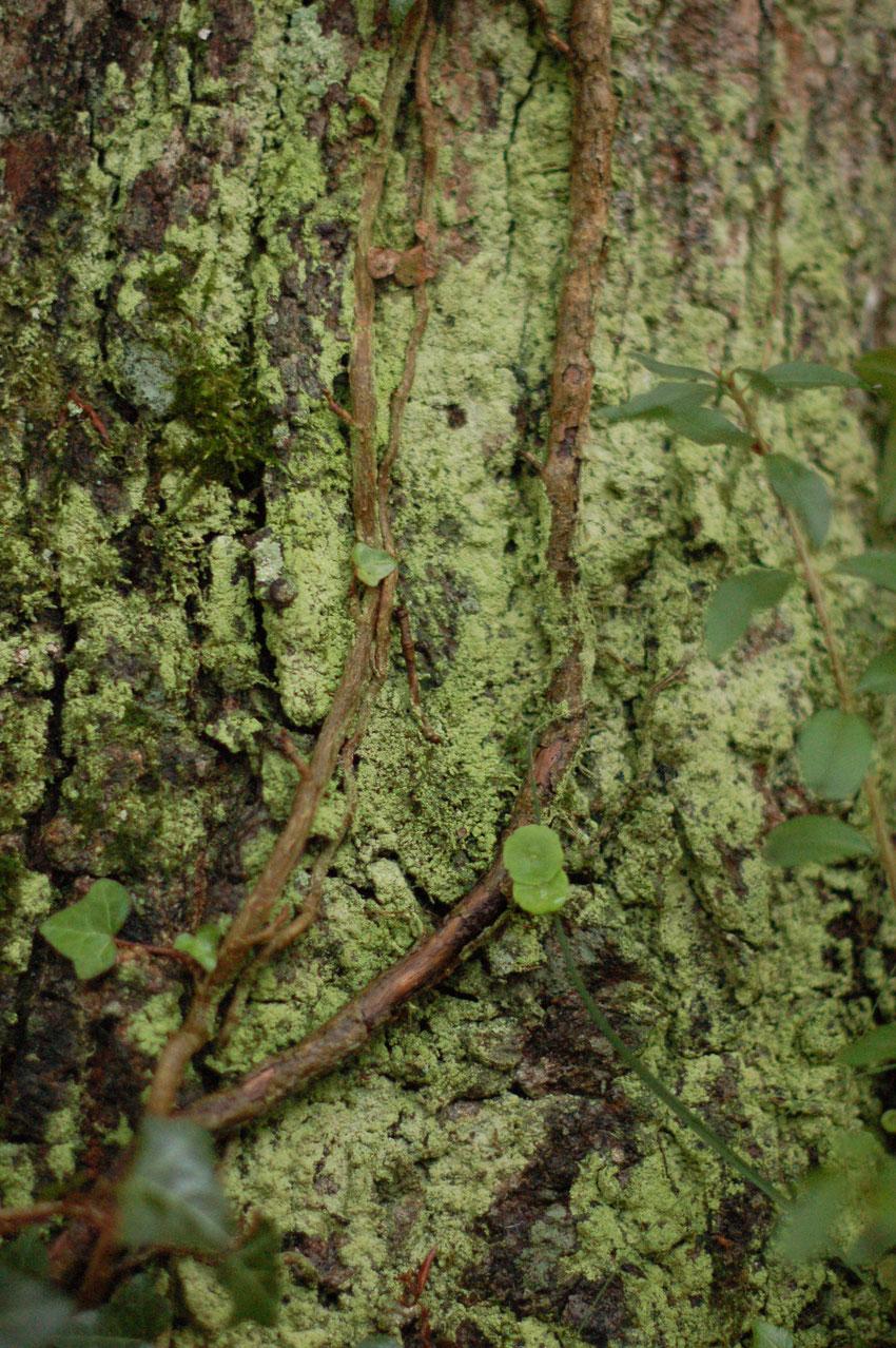 """Exemple de photographie du concours """"mousses, lichens et champignons"""" organisé avec l'Atlas de la Bidoversité Communale de Saint-Aubin-du-Cormier"""