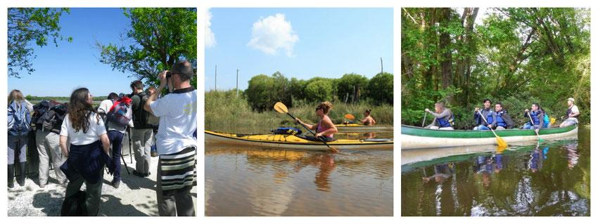 Le Teich Vacances , Bassin Arcachon Tourisme -  - Maison de la Nature