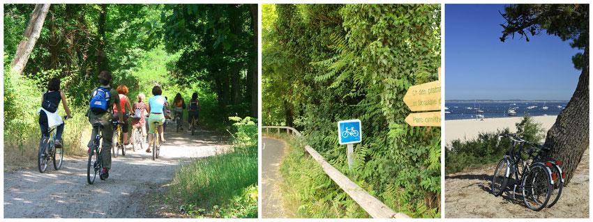 Le Teich - Bassin d'Arcachon - Vélos et pistes cyclables