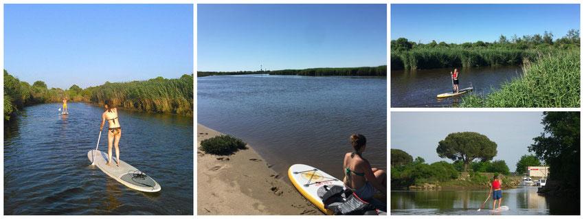Le Teich - Bassin d'Arcachon - Stand Up Paddle sur la Leyre et le Delta