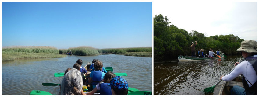 Le Teich - Bassin d'Arcachon - Canoë collectif - Barque