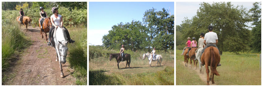 faire du cheval sur le bassin d arcachon ad18d8df0cc