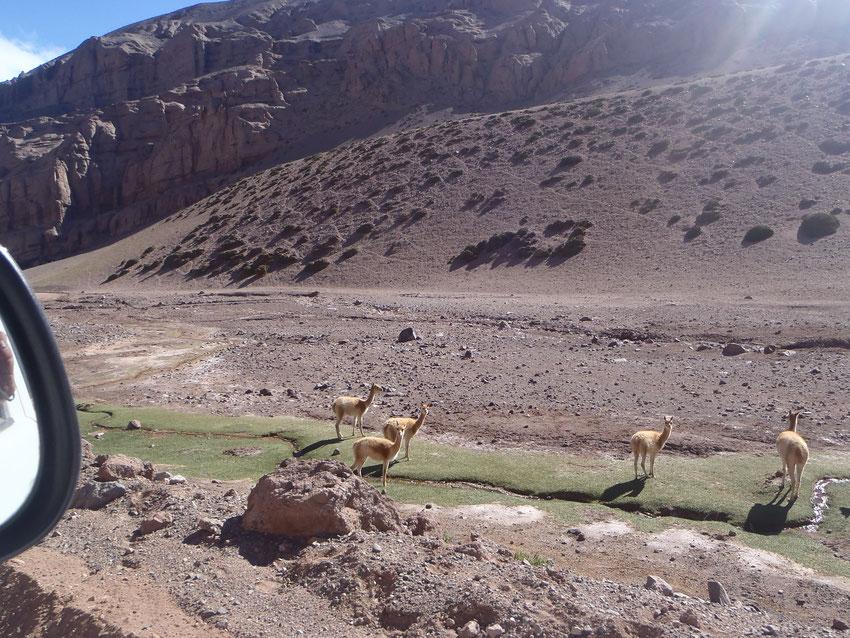 El río Peñón y la fauna que de él se nutre.