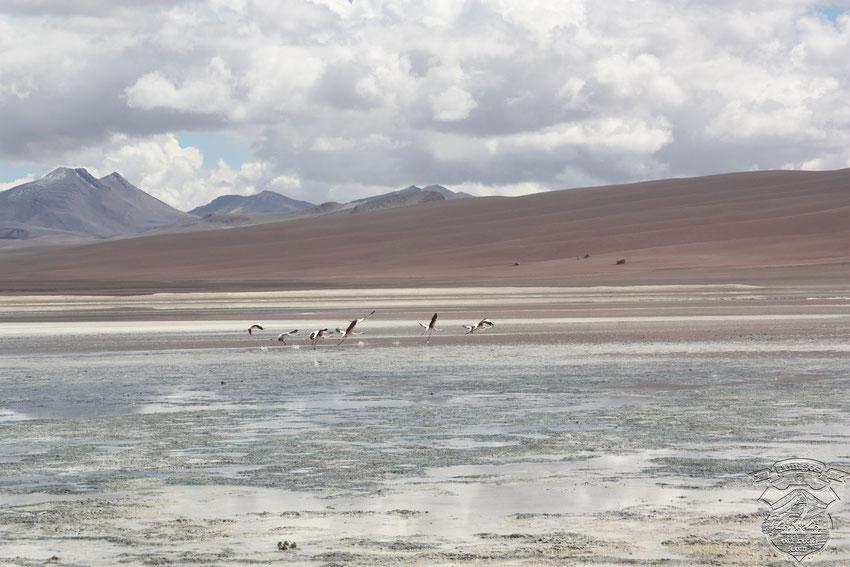 Laguna Lejia