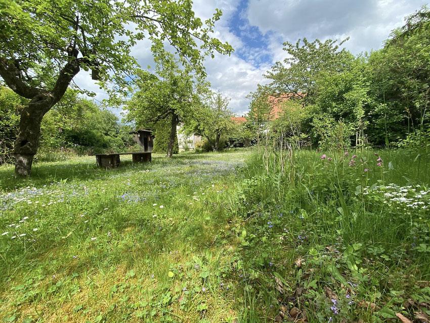 Bunte Wiese, blühende Blumen, ein Naturgarten im Mai. Ein Bild von naturgeflatter.