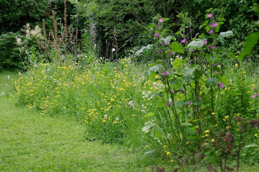 Ein bunt blühender Streifen aus Stauden im Garten. Ideal für Insekten, Vögel und Fledermäuse. Ein Bild von naturgeflatter.