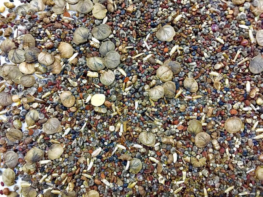 Über 20 verschiedene Saaten, bunte Vielfalt für viele Nachtfalter, nacturgeflatter