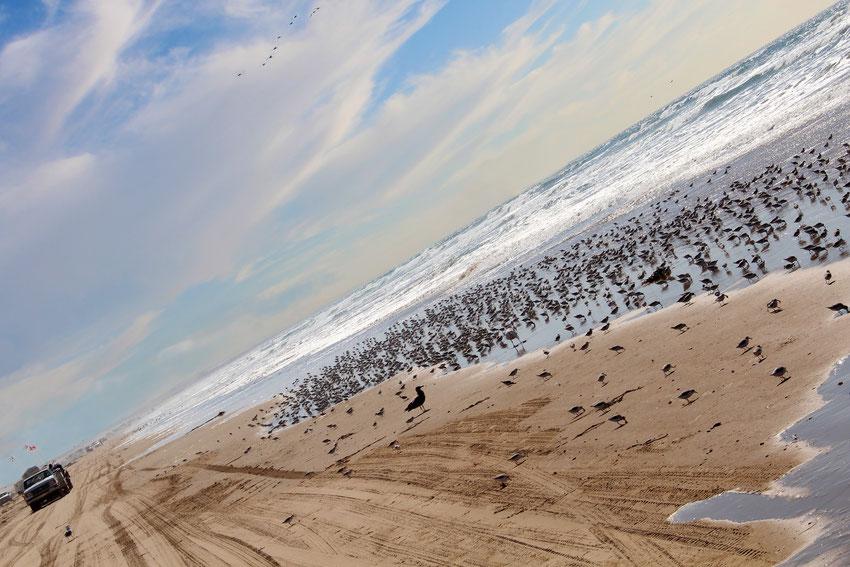 Kein Titel - Am Strand der kalifornischen Westküste