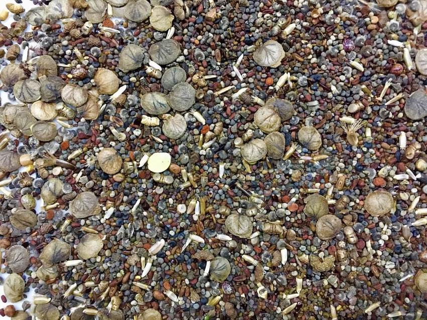 Wilde Vielfalt. Die Saatmischung ein Garten für Nachtschwärmer