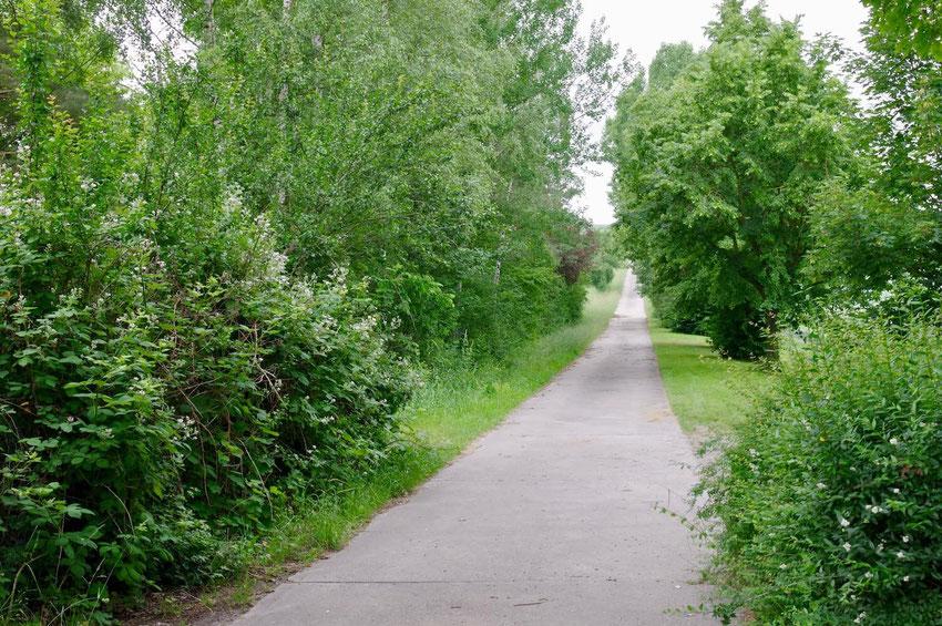 Lange Baumreihen, Hecken, Hochstauden. An solche linearen Strukturen, jagen Fledermäuse nach Insekten.