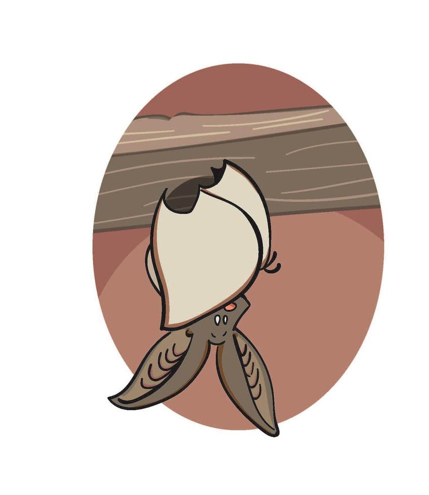 Kopfüber, in seine Flügel gehüllt, hängt ein Graues Langohr von der Decke.