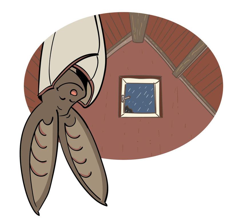 Das Graue Langohr hat ein Dach über dem Kopf.
