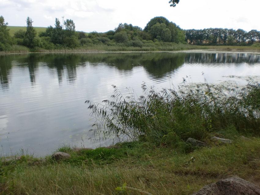 Neuenfelder See. Hier kann man auch baden.