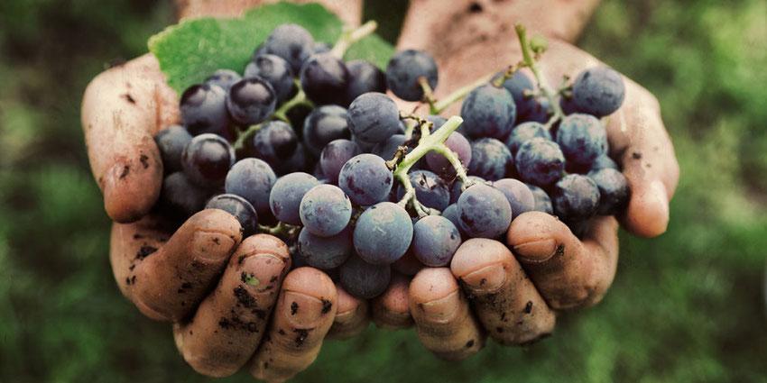 valerie labrousse, cama y desayuno, chateau du payre, historia de Burdeos, Burdeos, Francia, vino de Burdeos, Terra vitis