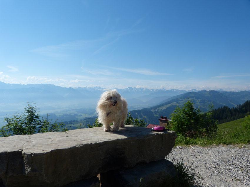 Wandern mit Hund im Allgäu