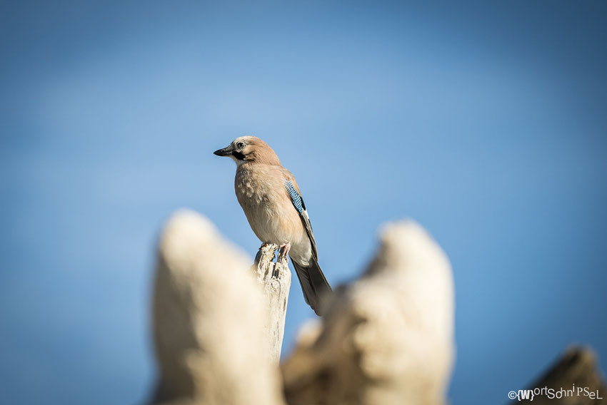 buntes Vögelchen