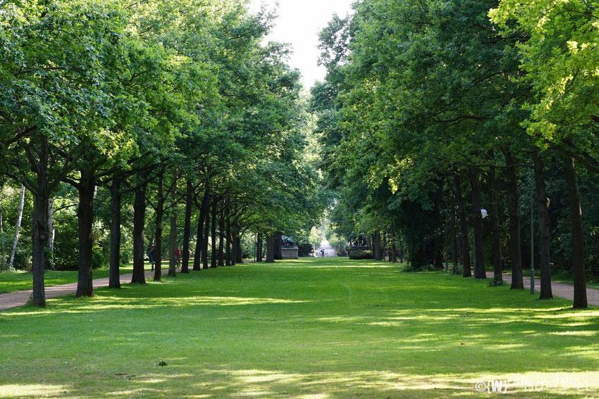 lange Baumalleen durchziehen den Tiergarten