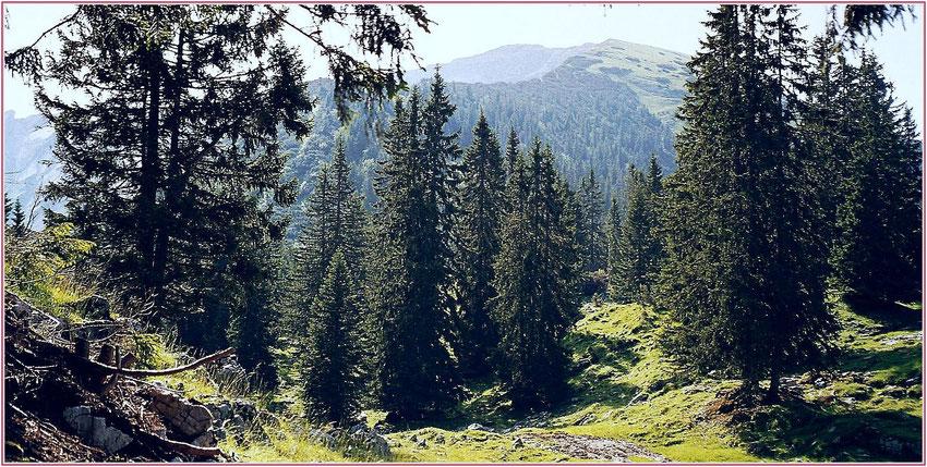Schafreuter Bayern - Blick zum Gipfel beim Aufstieg