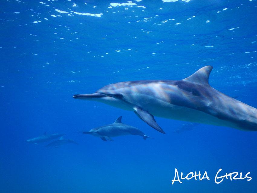 ゴールデンアンカーズ アクアマイスター串本 海ブログ 「Aloha Girls の海ブログ」