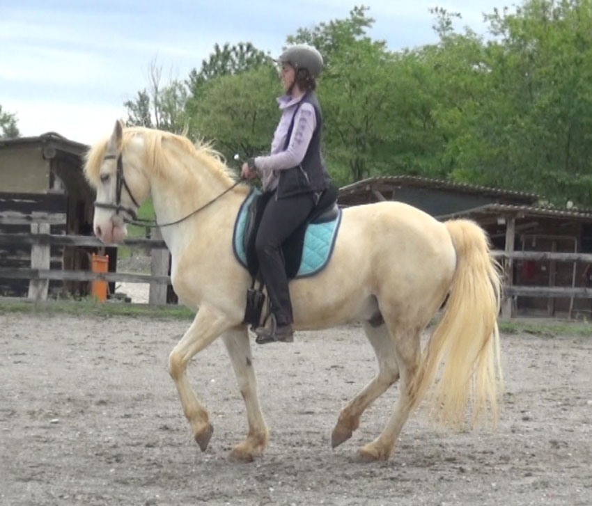 What has classical dressage to do with clicker training