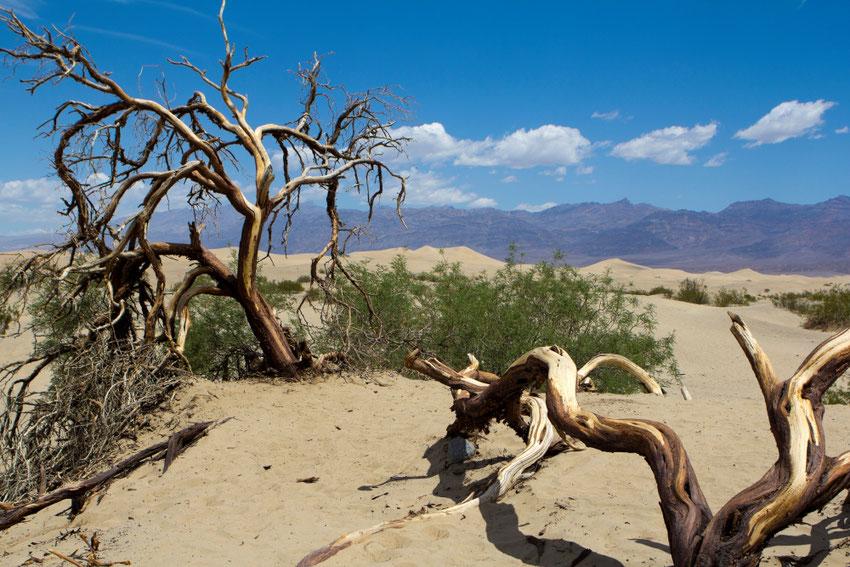 Moskito kopos Mirties slėnyje
