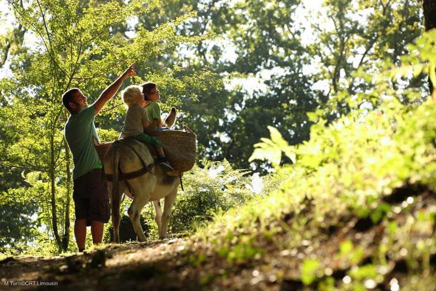 Ferme pédagogique avec des Ânes en Limousin