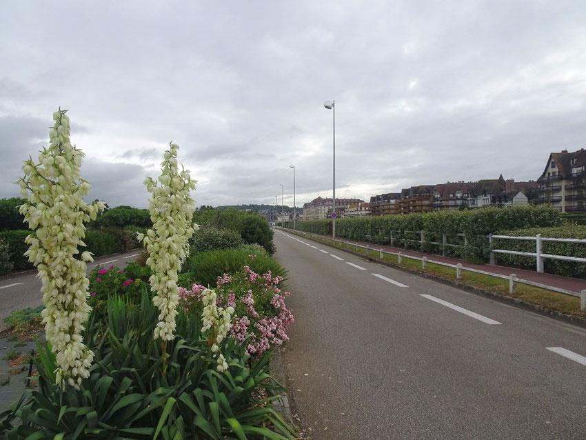 La route en bord de mer, Deauville