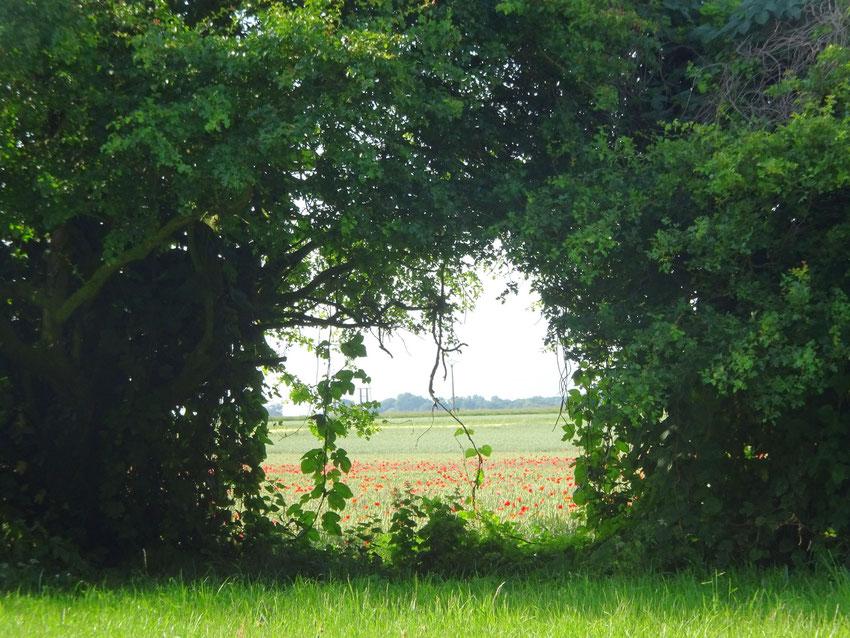 La beauté du paysage cache la longueur du chemin