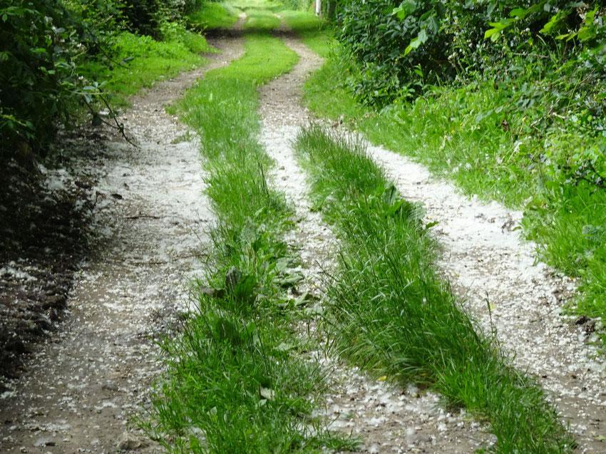 J'irai sur les chemins  Je mendierai ma vie