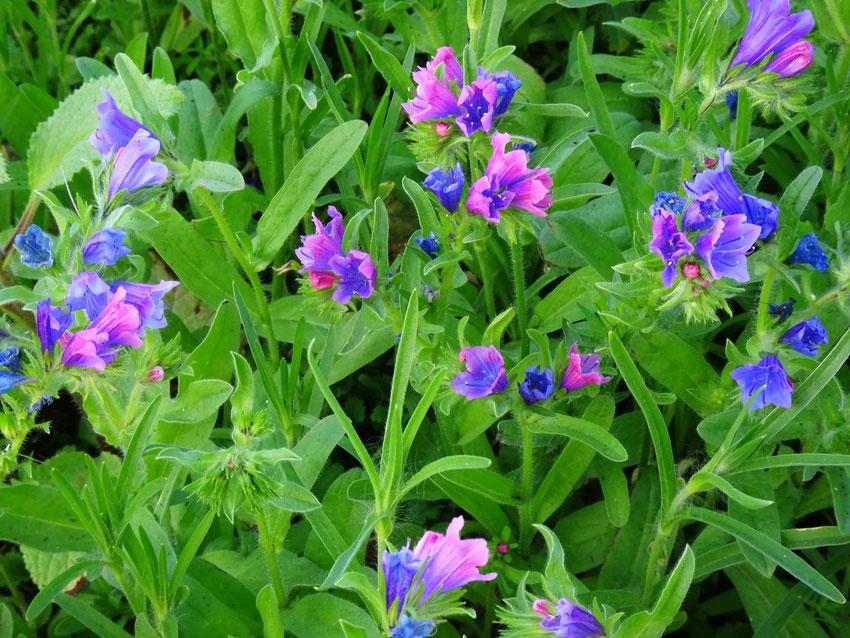 fleur bleue et rose