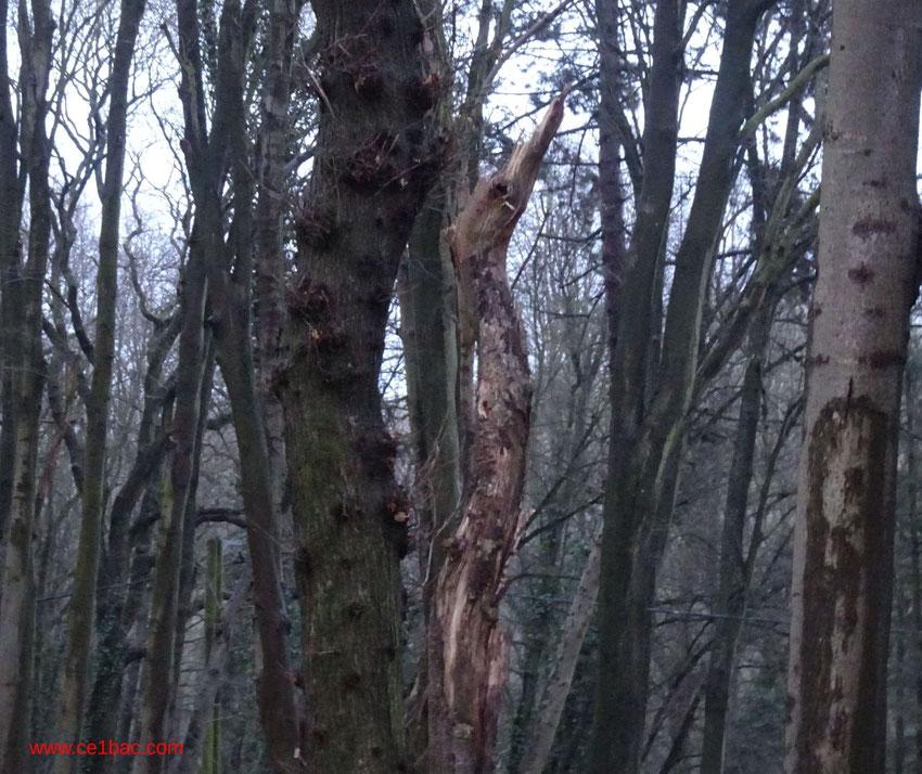 un arbre mystérieux