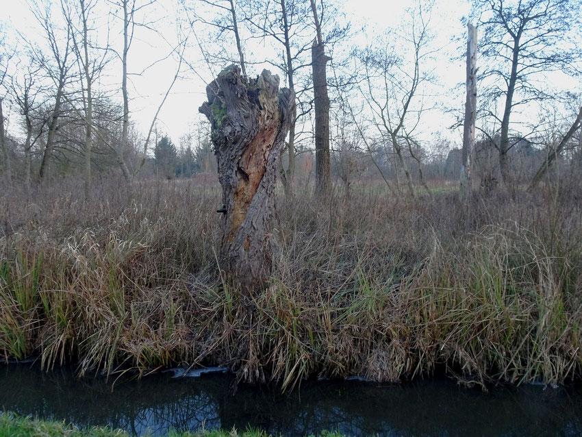 Tronc d'arbre au bord de l'eau