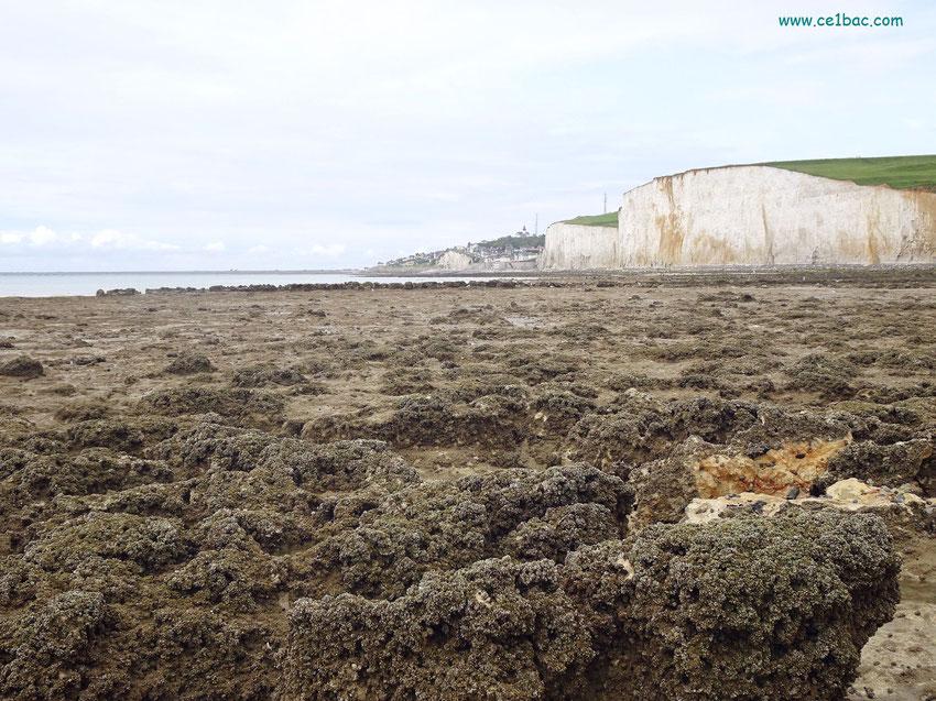 La côte sauvage au Bois de Cise (80)