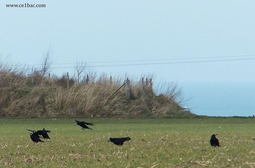 Ami, entends-tu le vol noir des corbeaux sur nos plaines ?