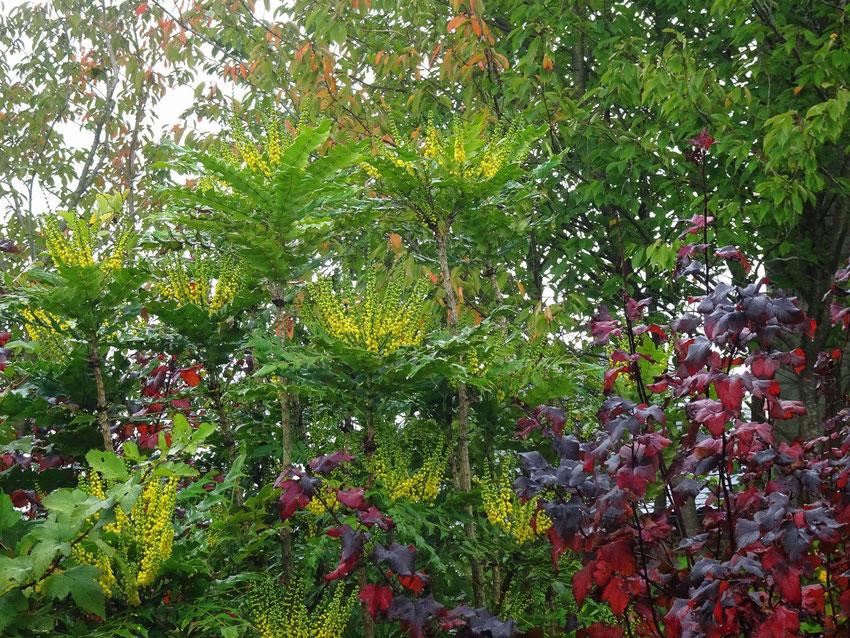 arbustes en décembre