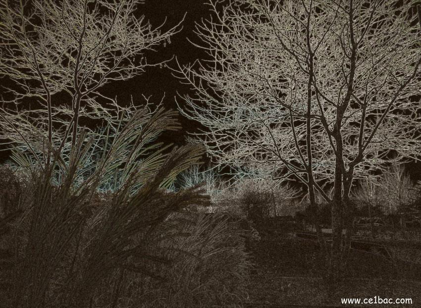 Dans le vieux parc solitaire et glacé
